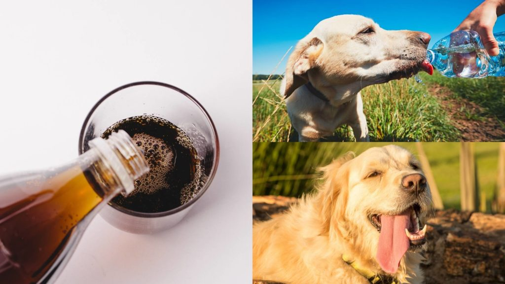 Can Dogs Drink Coke or Cola