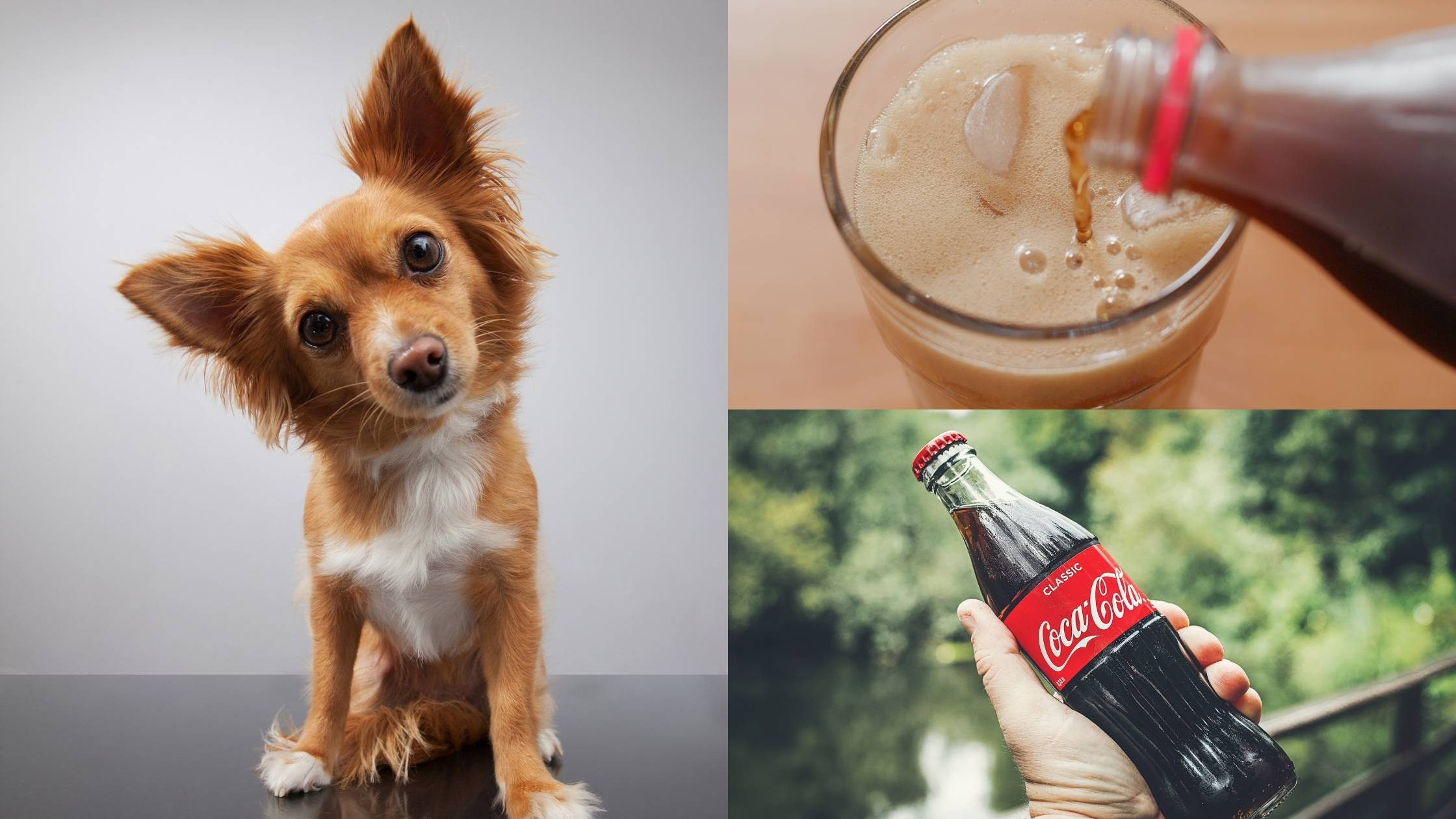 Can Dogs Drink Soda
