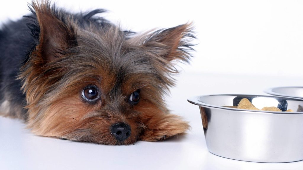 Is Soda Poisonous to Dogs