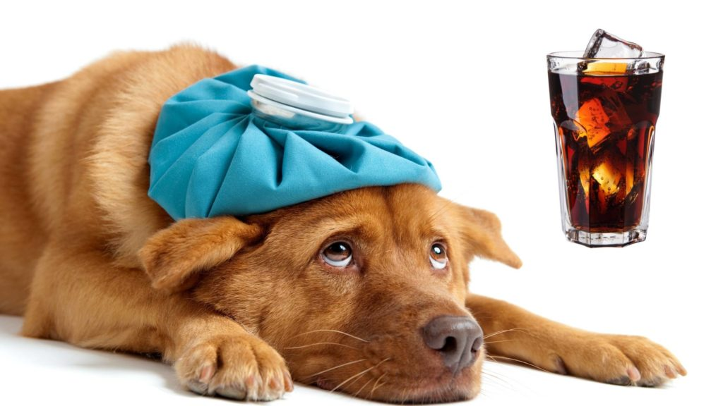 What Does Caffeine Do to Dogs