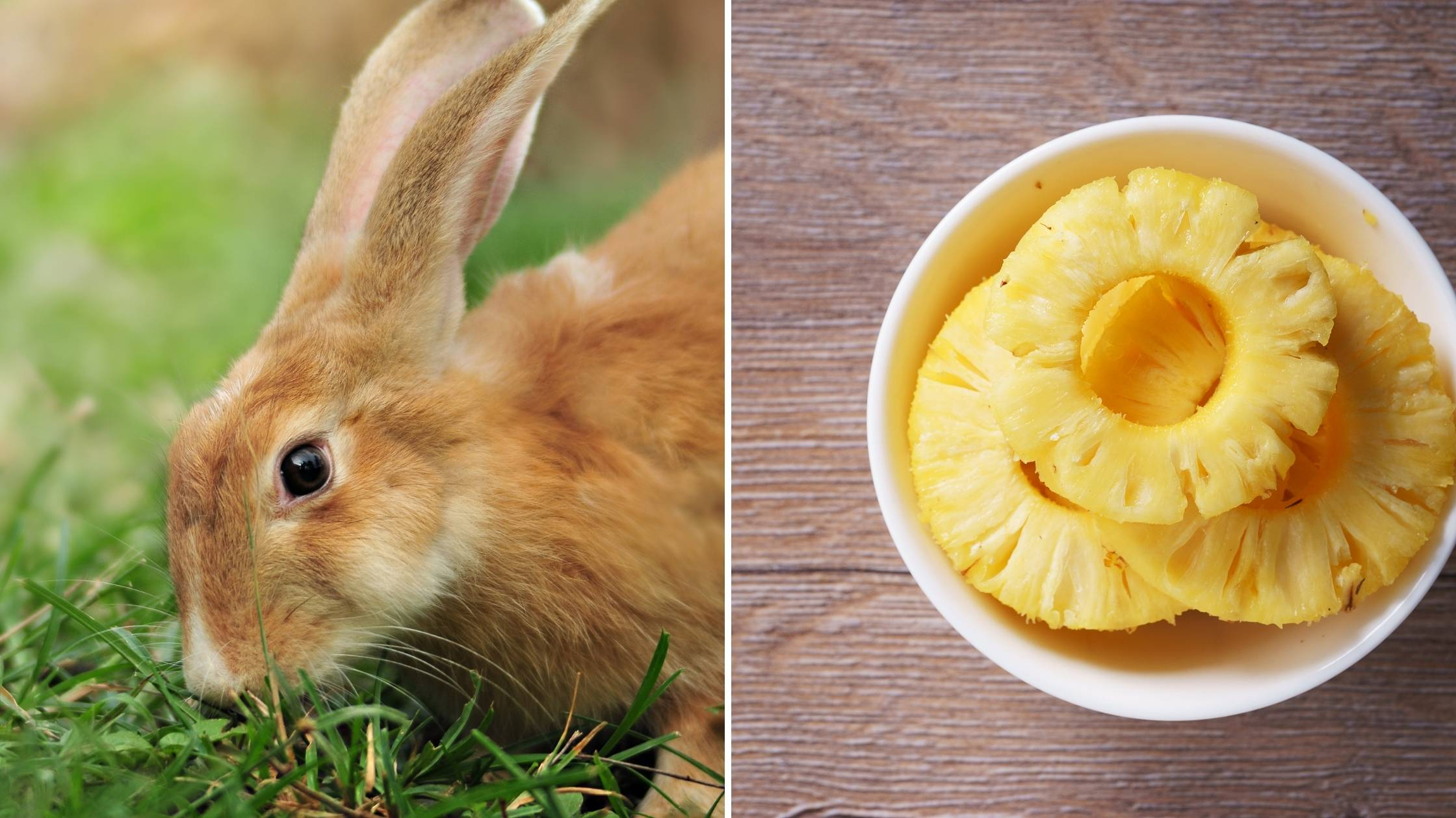 can bunnies eat pineapple