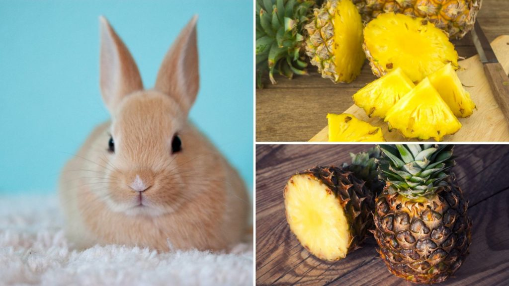 is pineapple good for rabbits