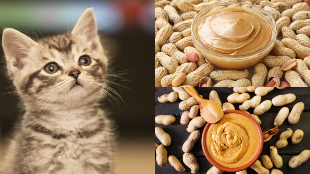 Can Cats Eat Peanut Butter