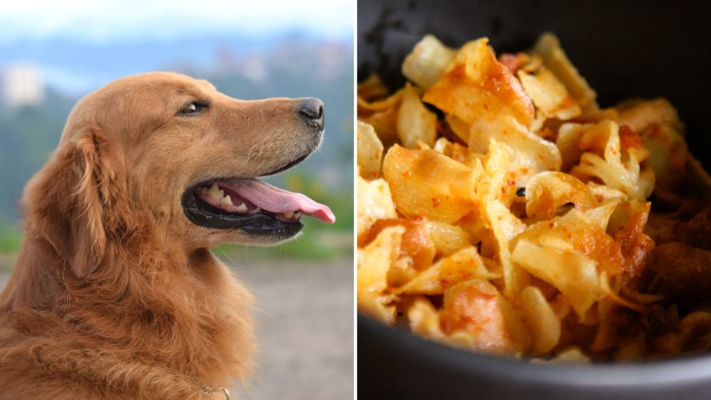 Can Dogs Eat Cooked Water Chestnuts