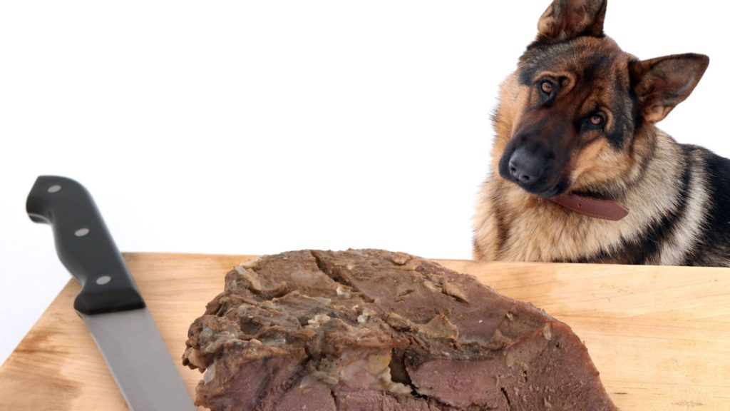 Can Dogs Eat Cow Tongue