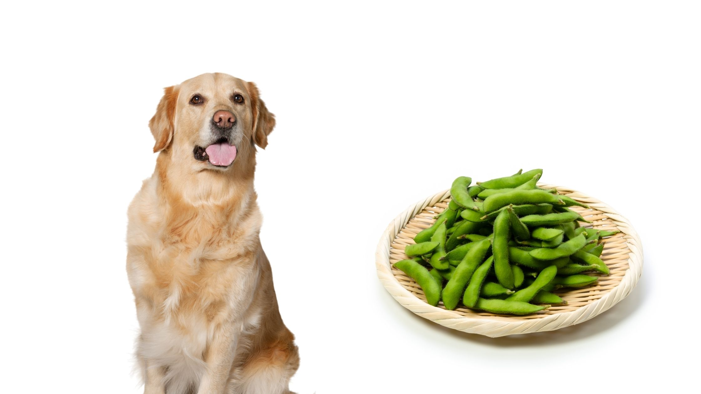 Can Dogs Eat Edamame Beans