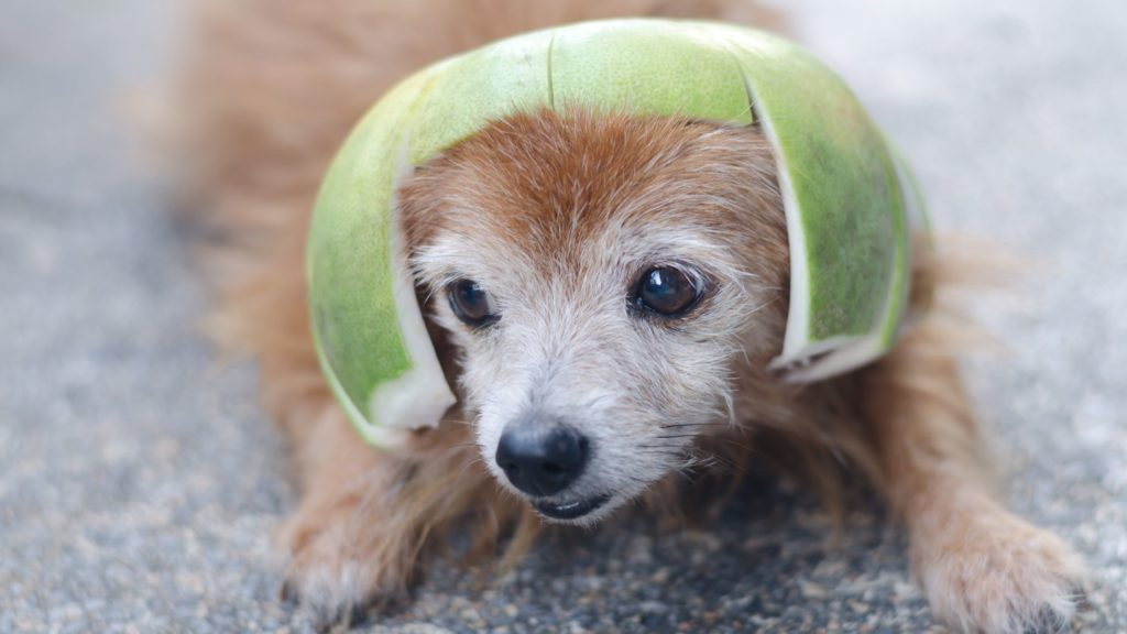 Can Dogs Eat Pomelo Fruit