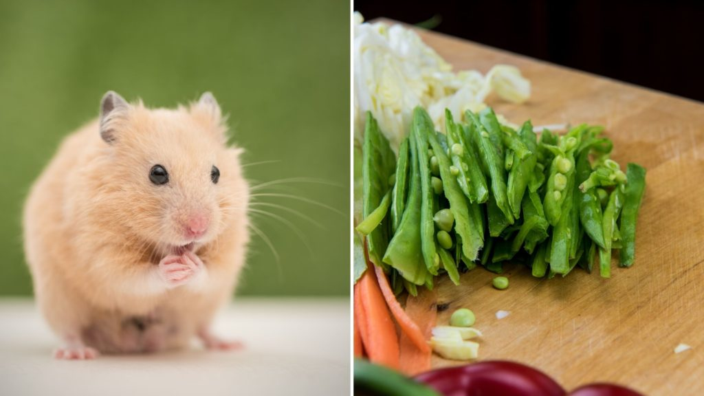 Can Hamsters Eat Cooked Snow Peas