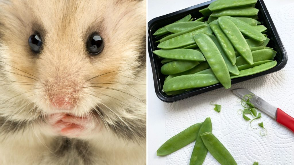 Can Hamsters Eat Raw Snow Peas