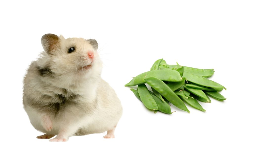 Can Hamsters Eat Snow Peas
