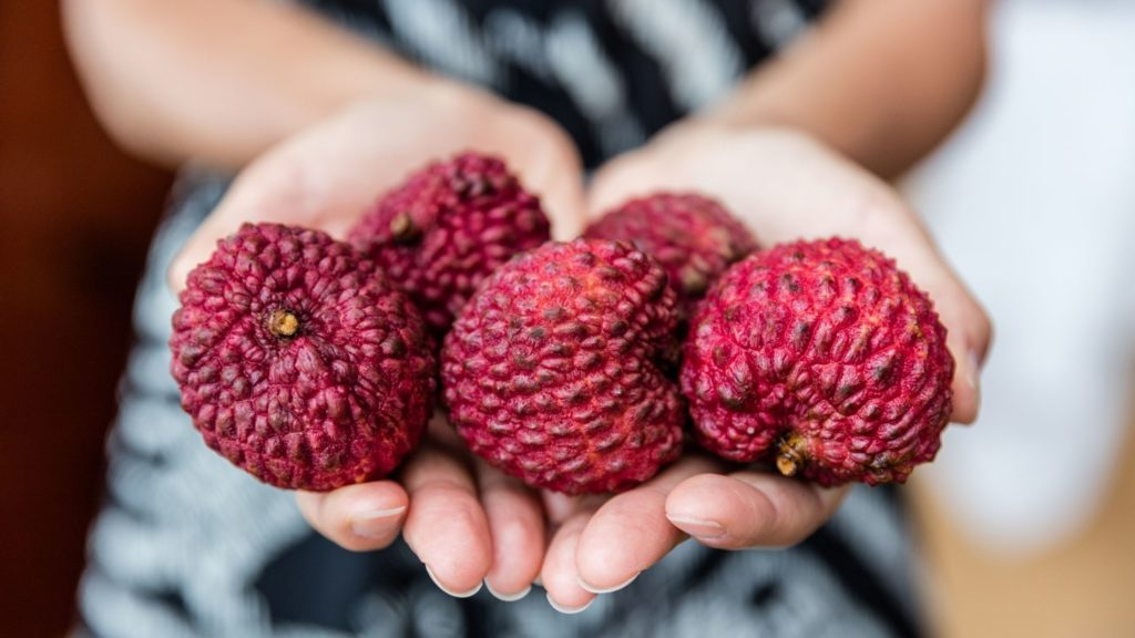 Can Lychee Fruit Kill Dogs