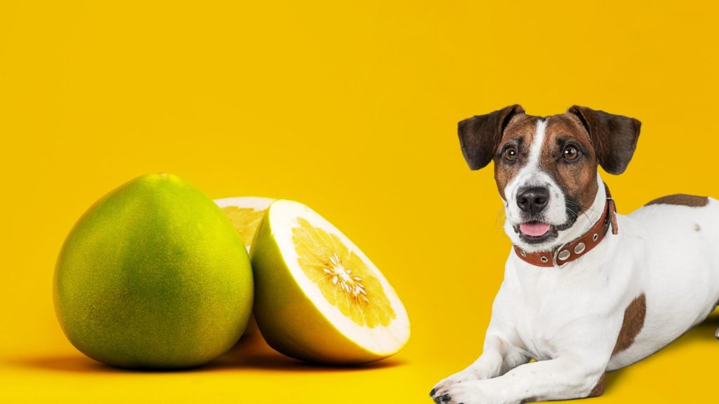 Can Puppies Eat Pomelo