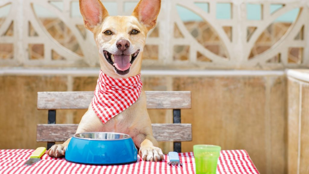 How Much Cow Tongue Can Dogs Eat