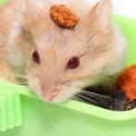 Is Red Cabbage Bad for Hamsters