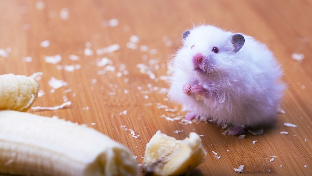 What Can I Feed My Hamster Instead of Arugula