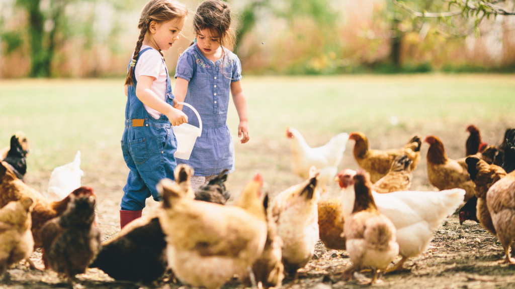 best farm dogs for chickens
