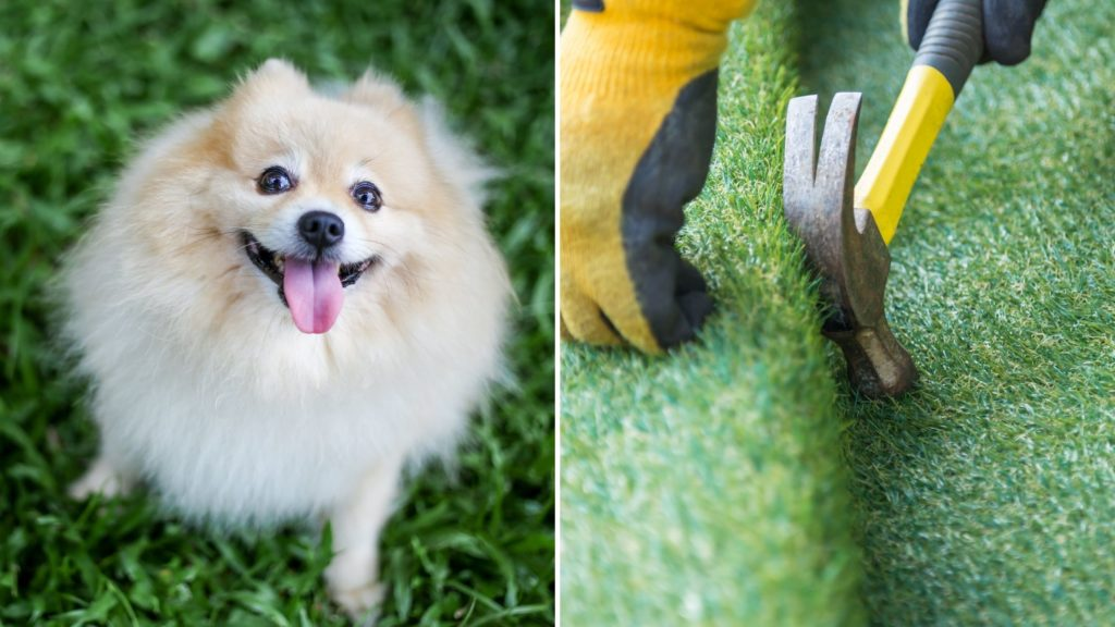 Can Dogs be Allergic to Artificial Grass (2)
